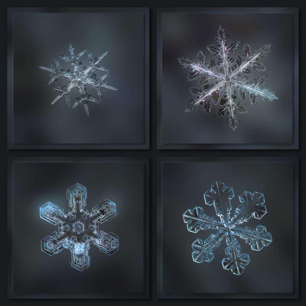 A dark gray collage with four real snowflake macro photographs